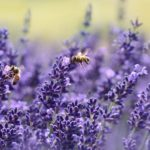 Lavender - Rebel Retirement