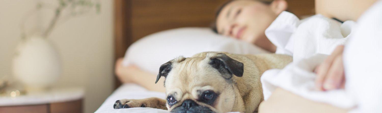 Sleep - Rebel Retirement
